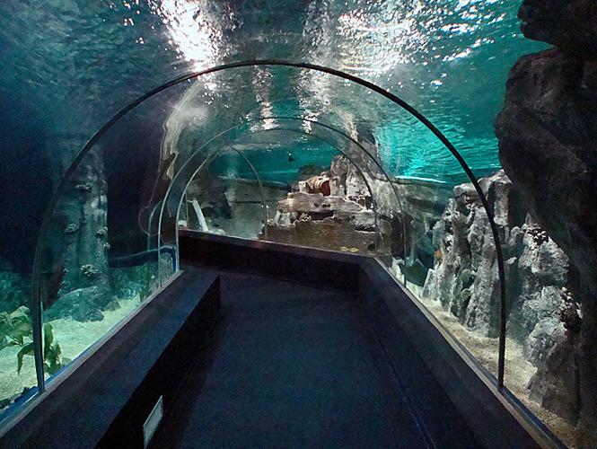 сколько стоит вход в дельфинарий в батуми вытекает